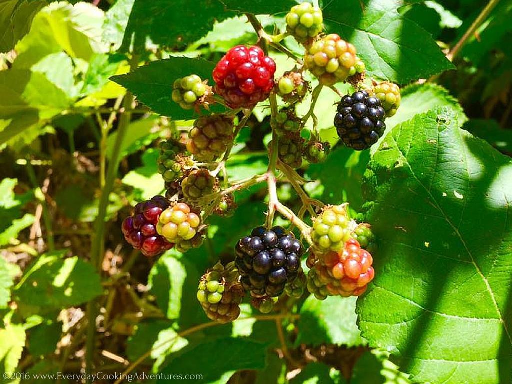 Marilyn Batali's Blackberry Pie ©EverydayCookingAdventures2016